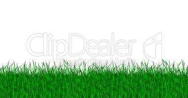 Rasen Wiese vor weißem Hintergrund