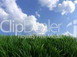 Rasen Wiese vor blauem Himmel mit Wolken