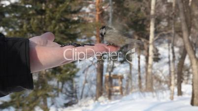 Birds eating seeds from hand.
