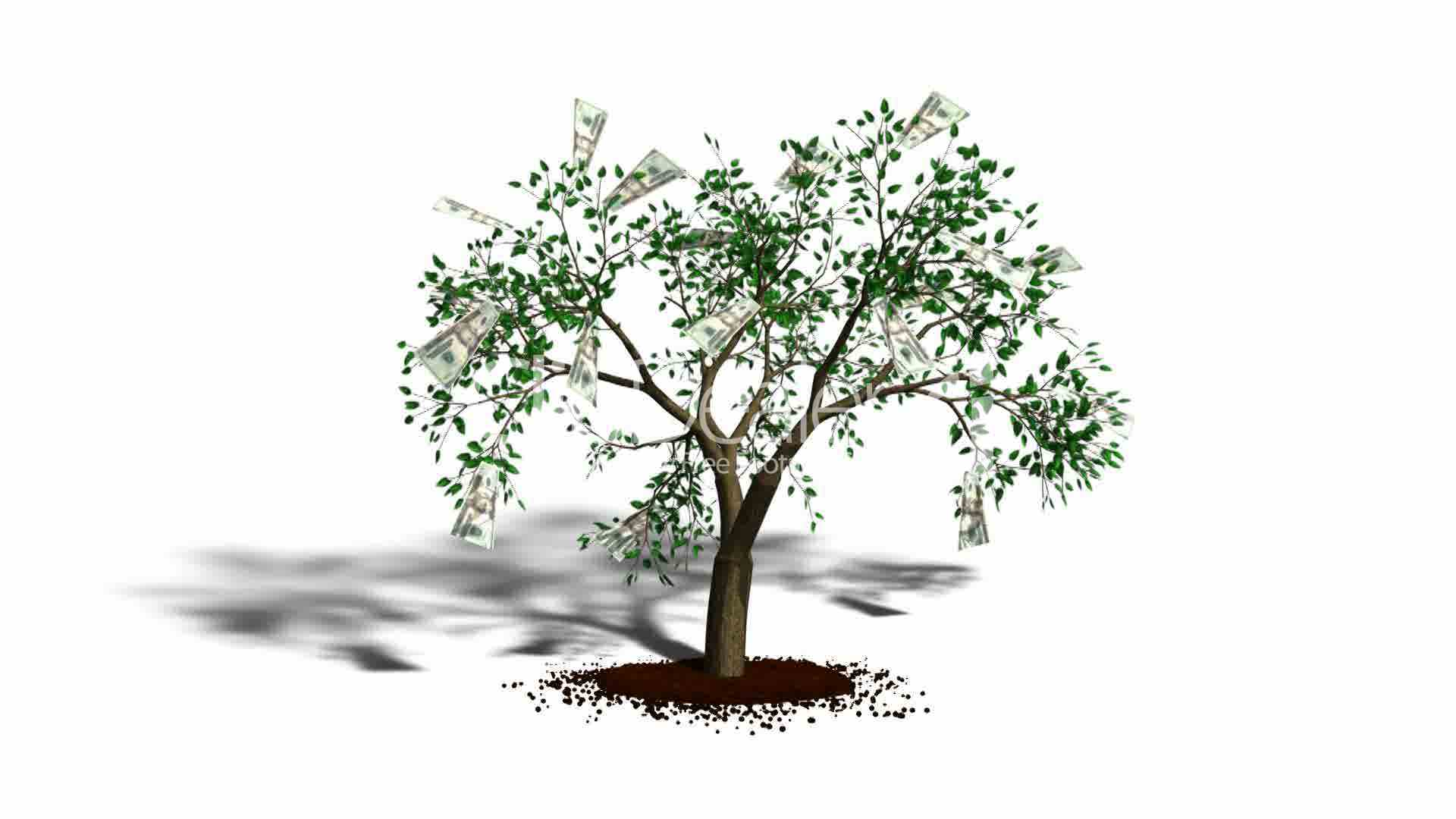 Money Tree on White Background HD1080: Royalty-free video and stock footage