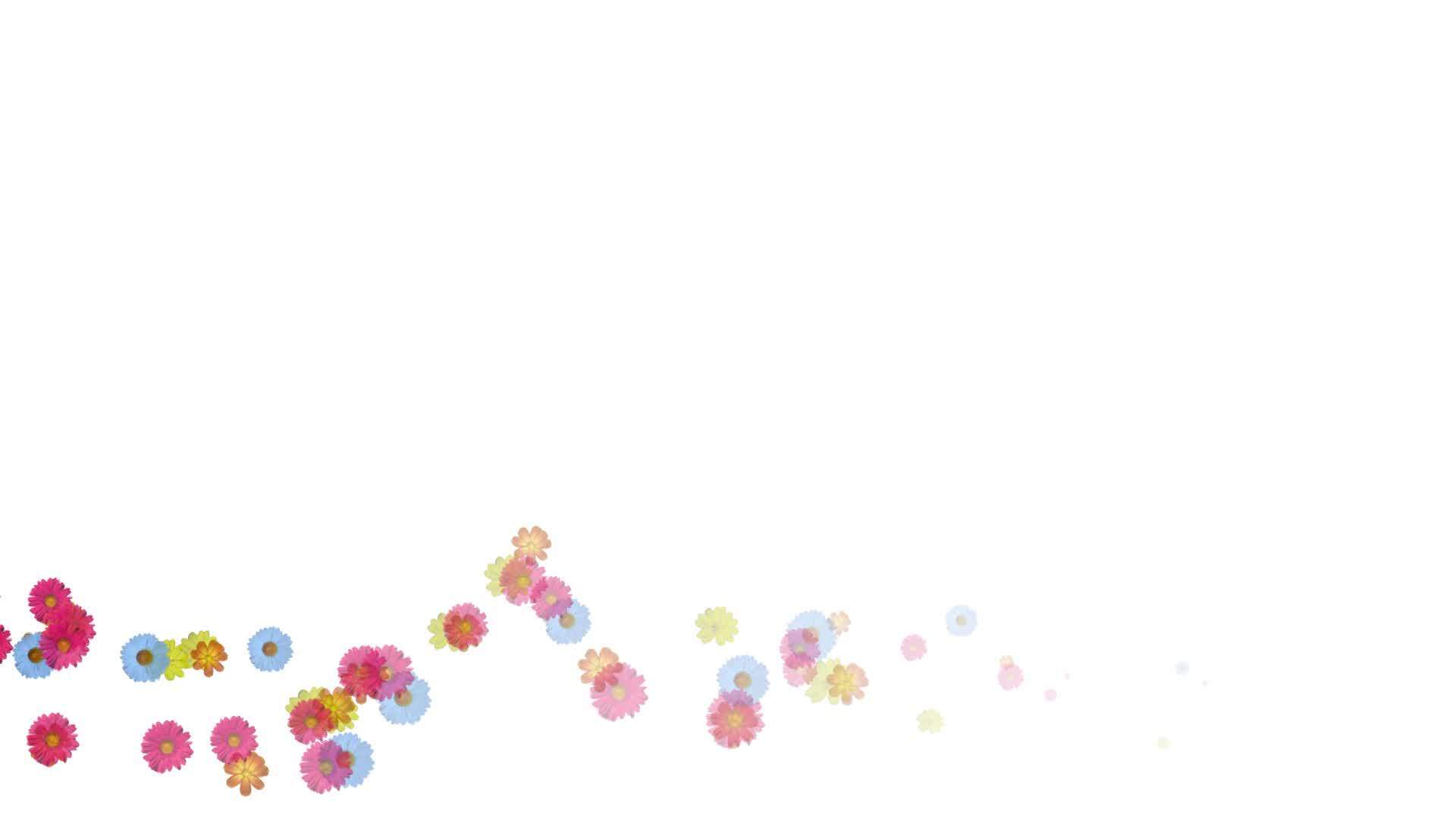 Animation of swirl flowers flying on white background alpha background flowers plant animation white dhlflorist Image collections