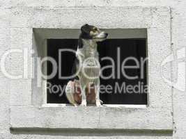 Port-Louis, Hund am Fenster