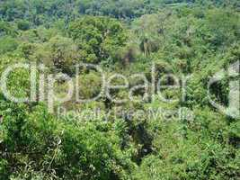 Regenwald Argentinien