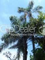 2 Palmen im Urwald