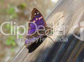Schmetterling Urwald 03