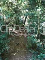 Dschungel Argentinien 02