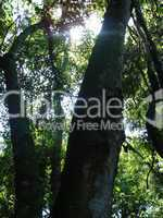 Vogelpark Bäume Brasilien