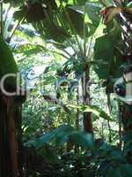 Vogelpark Bananenstauden