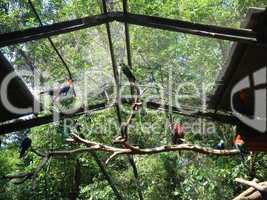 Vogelpark Papageien