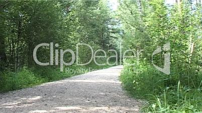 Weg im Moorwald 01