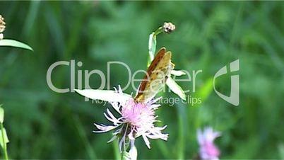 Schmetterling Blume 03