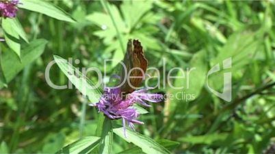 Schmetterling Blume 02