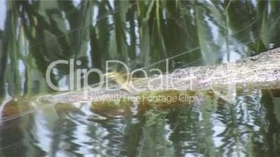 Libelle am Moorsee