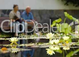 Seniorenpaar am Seerosenteich