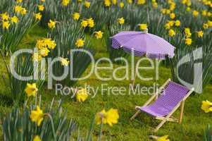 Narzissenwiese mit Liegestuhl und Sonnenschrim