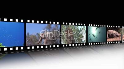 Filmstreifen mit Tieraufnahmen
