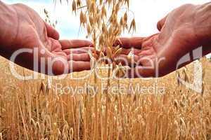 Goldenes Getreide