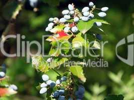 Zweig im Herbst