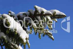 Tannenzweig mit Schnee