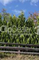 Bäume und Zaun