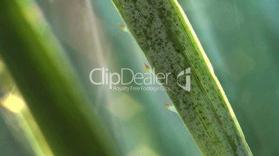 Aloe Pflanze besprühen