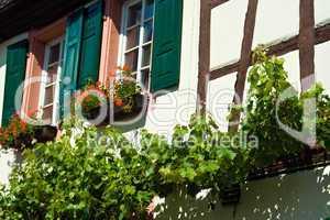 Fachwerkhaus mit Weinrebe, frame house with vine