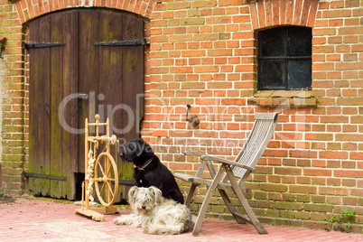 Spinnrad mit zwei Hunden, spinning wheel with two dogs