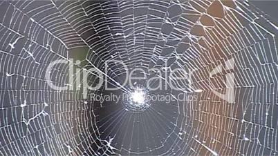 Spinnennetz Scharf