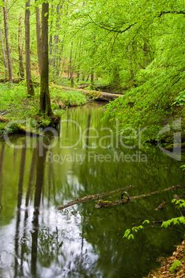 Wald und Fluss im Frühjahr, forest and river in spring