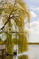 Weide und See, willow and lake
