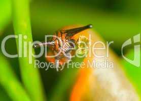 Kopf der Nacktschnecke beim Fressen  -.Colorful slug head close-up and blur green background.
