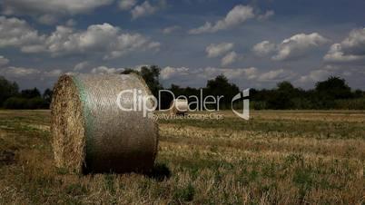 Strohballen auf dem Acker