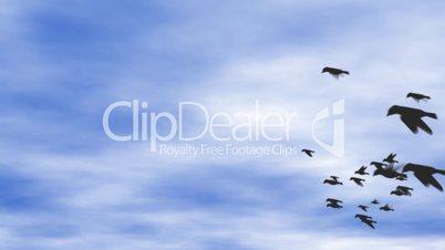 Flock of birds on blue sky - digital animation