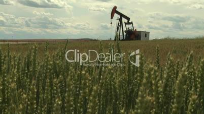 Oil pump jack in wheat field 10