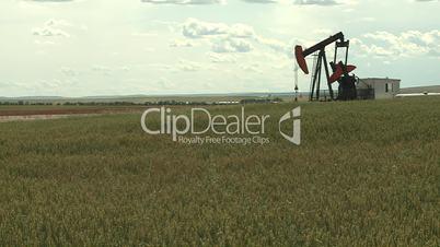 Oil pump jack in wheat field 5