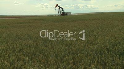 Oil pump jack in wheat field 6