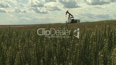 Oil pump jack in wheat field 8