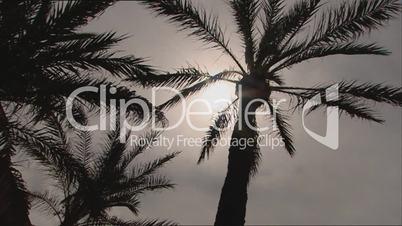 Palmen unter der Sonne