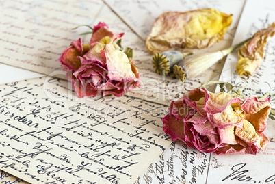 Rosenblüten auf Schrift