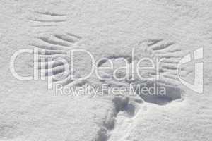 Flügelabdruck im Schnee