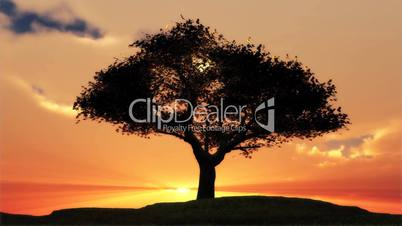(1076) Sentinel Summer Tree Sunset