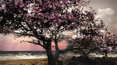(1079) Spring Snow Cherry Tree Landscape Nature HD Video Animation