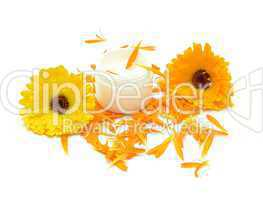 Hand-made beauty cream with flowers (calendula)