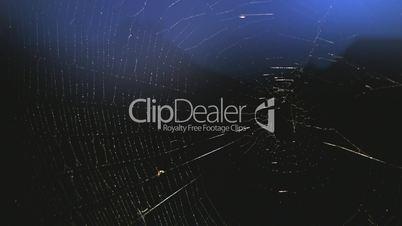 Spinnennetz gegen Abendhimmel