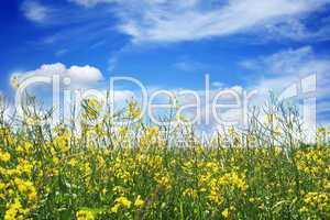 Blumenwiese mit Horizont