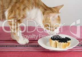Katze schnuppert an Kaviarhäppchen