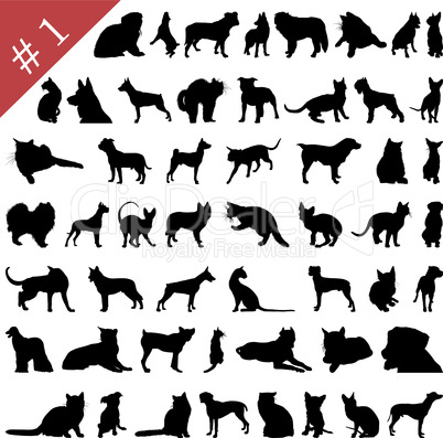 Katzen und Hunde