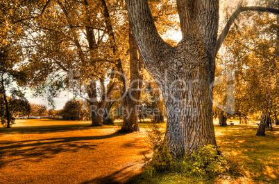 Herbsterwachen2