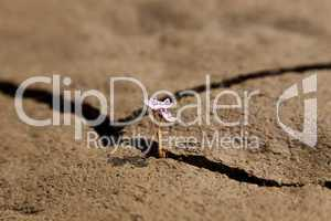 Flower Growing from Dry Cracked Earth