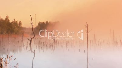 Morning dawn on the marsh